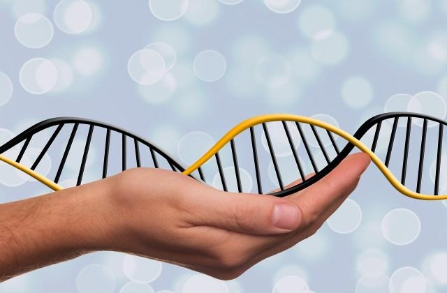 genetic genealogy is popular