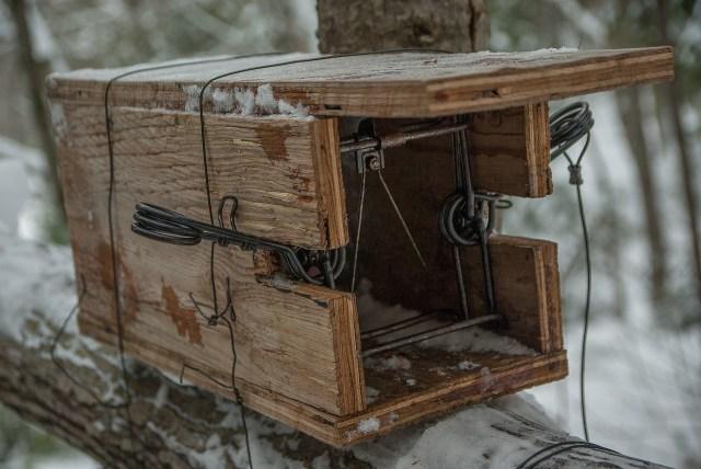genealogy traps