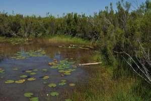 Écosystèmes