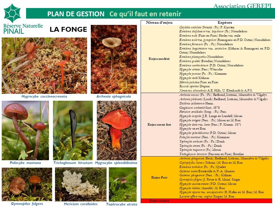Responsabilités de conservation de la réserve du Pinail pour la fonge