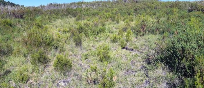 Bas marais de la réserve avec colonisation progressive de la prairie et lande humide