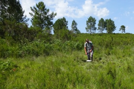 Relevé de végétation sur un bas marais envahi par la prairie à molinie et bientôt la fougère aigle
