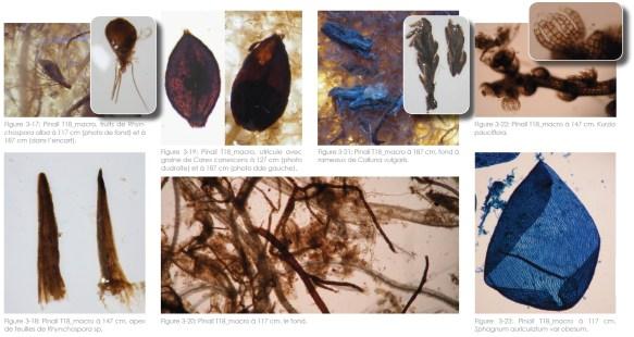 Macrorestes de végétaux archivés dans la mare T18 du Pinail © P Goubet