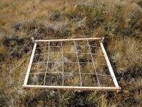 Suivi d'espèces rares par quadrat