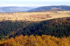 Tourbière du Gourds des Aillères et forêt de la Morte