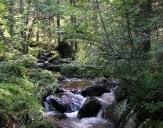 Ruisseau de Pierre-Brune