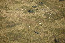 Des troupeaux et des landes