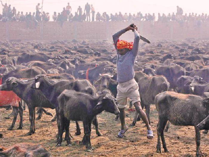 Image result for gadhimai