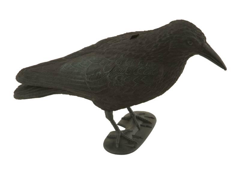 comment se d barrasser des pigeons r sidence du printemps paris 12 me. Black Bedroom Furniture Sets. Home Design Ideas