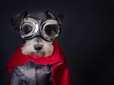 Apartment Marketing with Pets: 11 Tips for Adding More Sizzle to Your Pet-Friendly Community