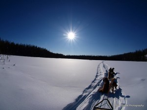 Sled dogs a resilient team