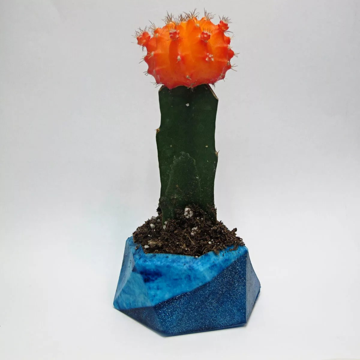 cactus in resin planter