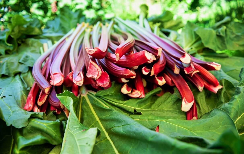 Rabarbaro come coltivarlo: 3 consigli per gambi belli, rossi e dolci