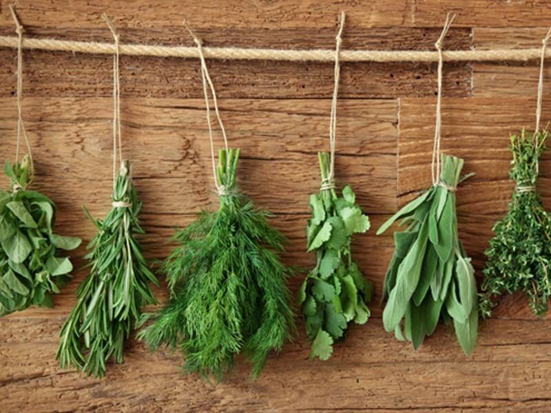 Piante aromatiche come rimedi naturali contro gli insetti