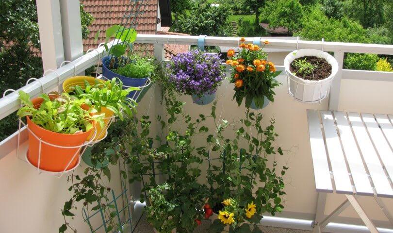 Come creare un mini orto sul balcone con le piante nane