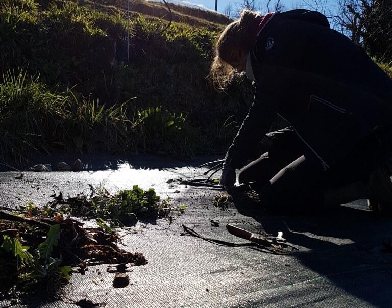 rabarbaro pianta pulizia da erbacce
