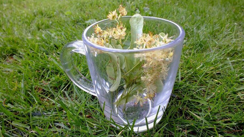 Tisane fatte in casa: 10 erbe commestibili per infusi fai da te