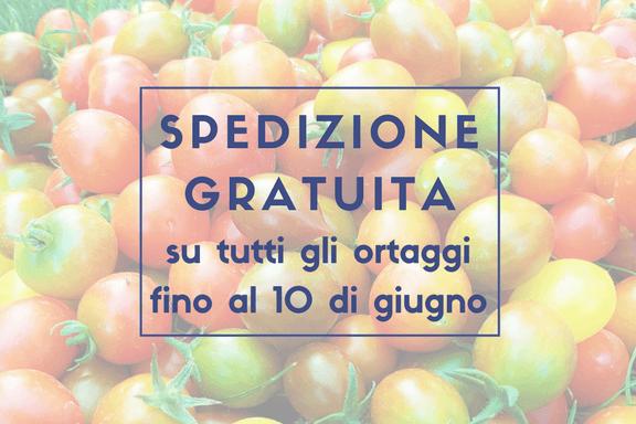 Offerta speciale sulle nostre inusuali piante di Pomodori, Melanzane e Peperoni