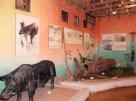 1階 展示室①
