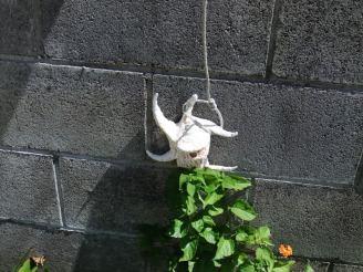 ブロック塀で見つけたクモガイ。