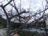 名護城公園の南口付近⑧