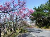 頂上手前の 「さくらの園」 付近④