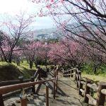 名護中央公園(名護城公園)