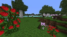 Roses Cows