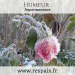 Humeur: Impermanence