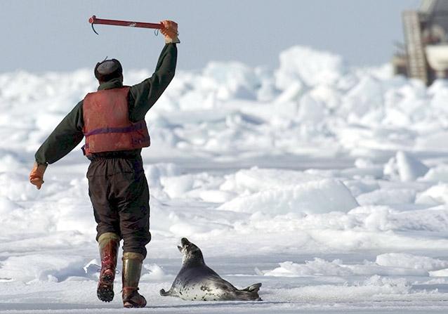 Greenpeace Les Phoques Et Paul Watson Peuvent Ils