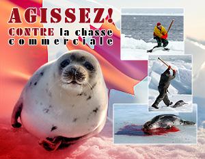 Résultats de recherche d'images pour «agissez contre la chasse commercial phoque»