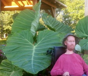Josh Spece in front of a Colocasia 'Thailand Giant' from his garden