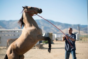 A man holding back a horse by pulling on it's leash
