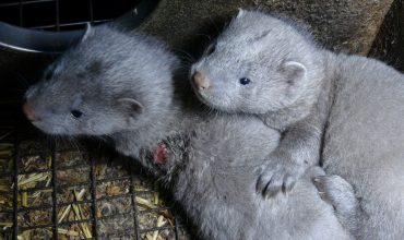 Slovakian parliament votes to ban fur farming