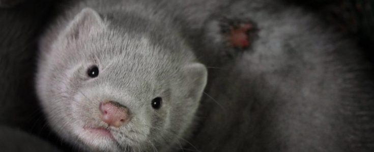 Is this the worst fur farm footage ever recorded?