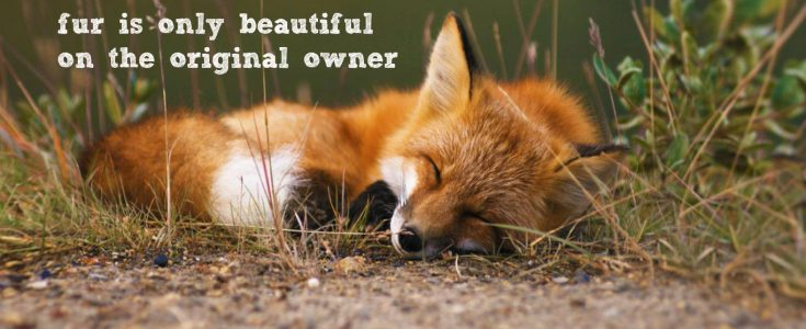 We want a Fur Free UK- sign our letter