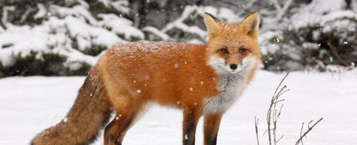 Pressure On The Government For A Fur Free UK