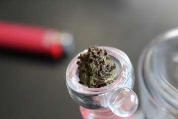 Cannabis Strain of the Week: Tangerine Dream | Review