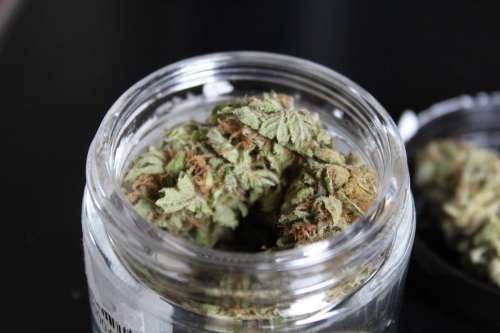 Have You Smoked Pineapple Express? | Strain Review | Respect My Region