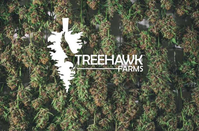 Testing The Black Afghan Strain From Treehawk Farms | Weed Review