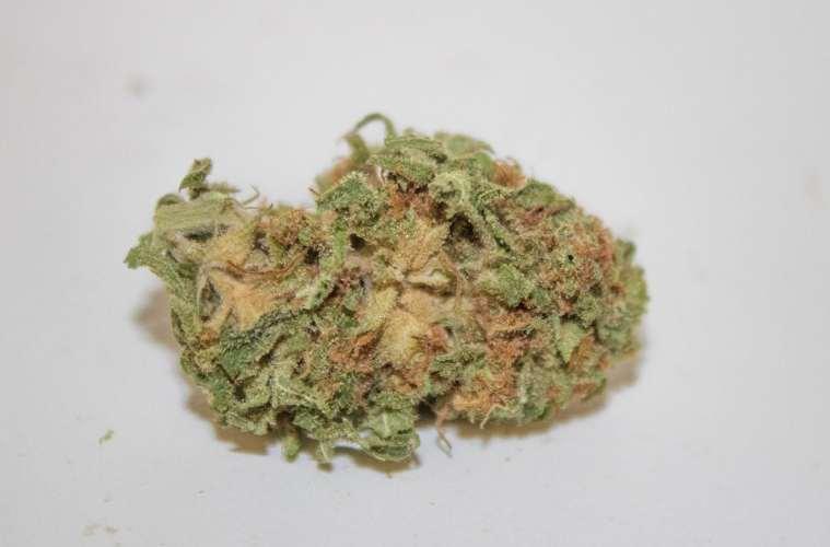 Alien Orange Cookies strain