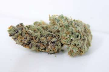 Why Is The Biscotti Strain So Dank? The Genetics Are Very Powerful