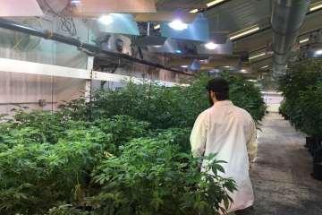 A Tour of Liberty Reach's Weed Farm in Raymond, Washington