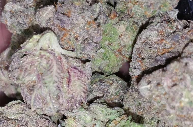 Candyland Strain Review - Learn Why Candyland Is One Of The Best Cannabis Options Available