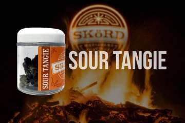 Skord's Sour Tangie Strain Is Citrusy With A Sour Diesel Twist