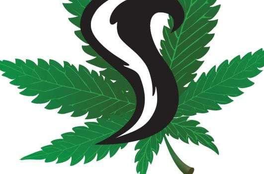 1937 Farms Skunk #1 Cannabis Review
