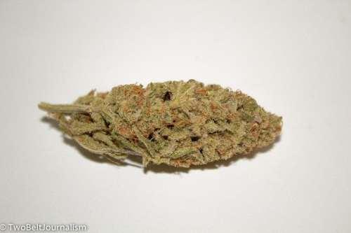 Limesicle Strain Review (Prod. Coastal Cannabis)