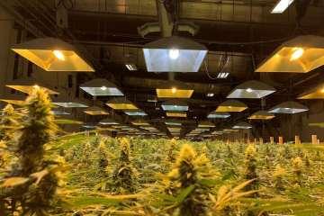 Orgrow Is A Family Oriented Cannabis Farm In Moxee Washington