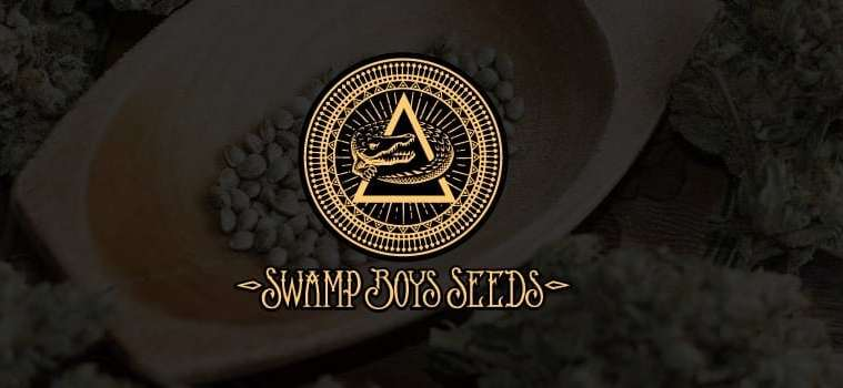 swamp boys cannabis strains