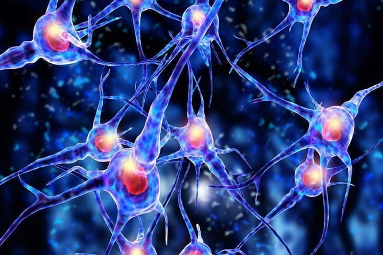 The Endocannabinoid System Is Effecting YOUR Smoking Experience